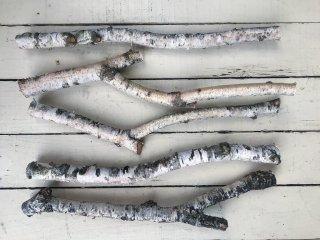 白樺の枝(Sサイズ 長さ約30cm)