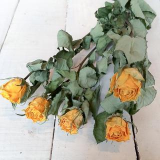 バラ 黄色(5本)