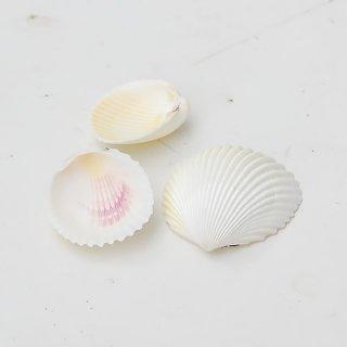 ホワイトコクルス (5枚)