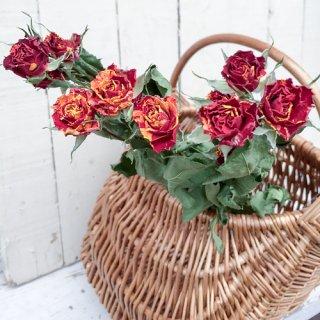 バラ ミニスプレー 赤×黄 混じり(3本)