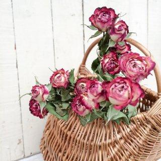 バラ ミニスプレー 白×縁ワイン(3本)