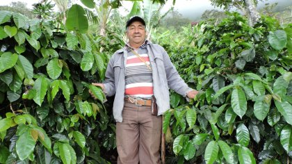 COLOMBIA PEDRO ANTONIO / NARINO EL HIGUERON(ホセ ロドリゲス ラ シラ農園 パライネマ種)