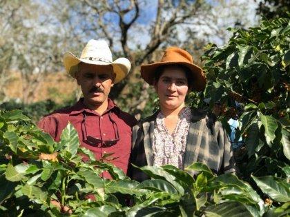 HONDURAS / ORLANDO CARVAJAL / LOS PINOS TYPICA HONEY(ホンジュラス オルランド・カルバハル/ロス・ピノス農園 ティピカ種 ハニープロセス)