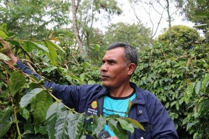 INDONESIA / MANDHELING CLASSIC BOURBON DARKROAST(インドネシア マンデリン ブルボン種 深煎り)