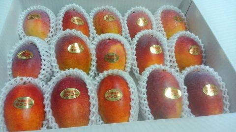 アップルマンゴー優品 4kg