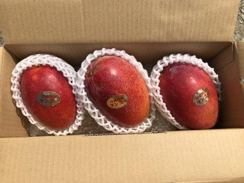 アップルマンゴー秀品 1kg