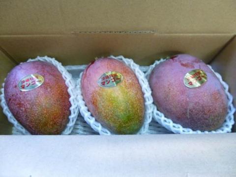 アップルマンゴー優級 1kg