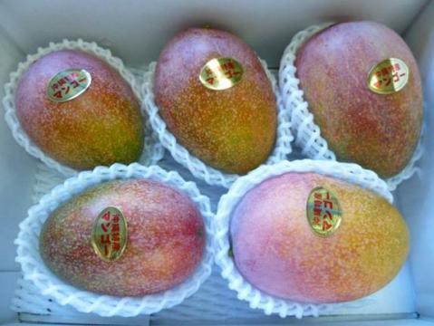 アップルマンゴー優品 2kg