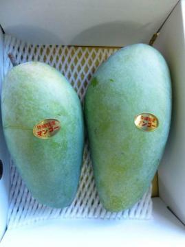 キンコウマンゴー秀品約2kg
