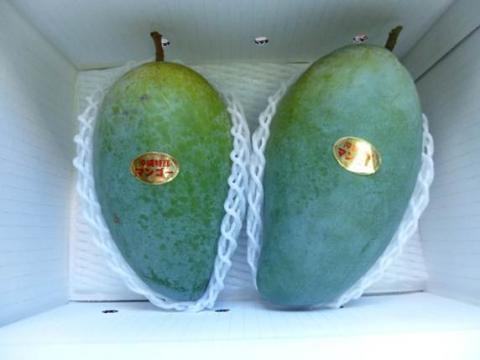 キンコウマンゴー優品約2kg