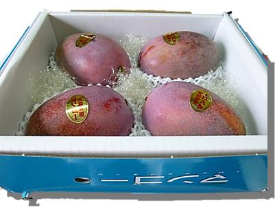 アップルマンゴー秀品 1.5kg
