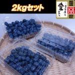 【ご自宅用】農薬・化学肥料不使用 完熟生ブルーベリー 2kg