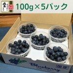 農薬・化学肥料不使用 完熟生ブルーベリー 100g×6パック
