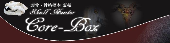 頭骨・骨格標本・剥製販売 【CORE-BOX】