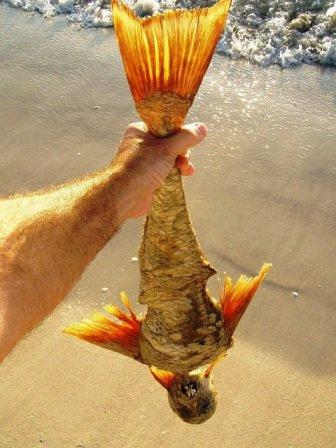 人魚 骨格