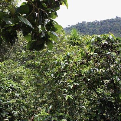 グァテマラ アティトラン|その他のイメージ1