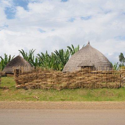エチオピア シダマ ナチュラル|その他のイメージ2