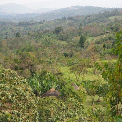 エチオピア シダマ ナチュラル|その他のイメージ3
