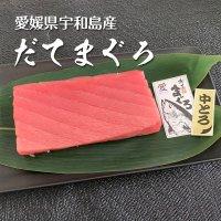 【お歳暮】愛媛県産 極上だてまぐろ(本マグロ)中トロ柵(約200g)
