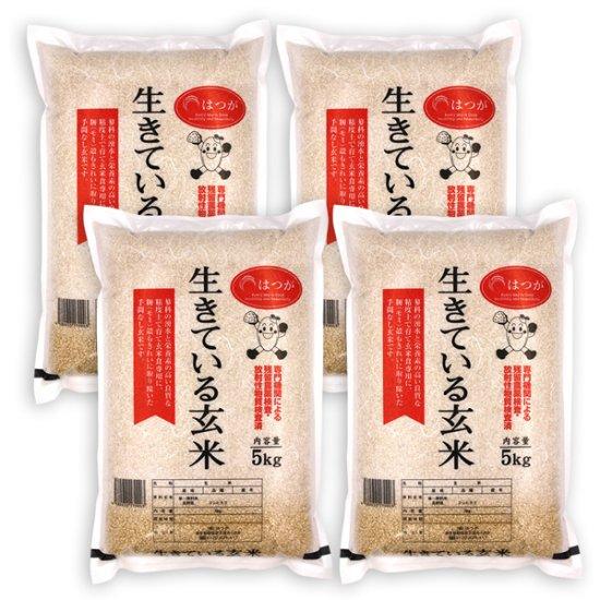 生きている玄米20kg ☆令和2年産☆