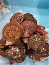 赤皿貝(アカザラガイ)【1kg加熱用】