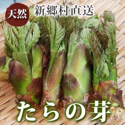 タラ の 芽 保存 方法