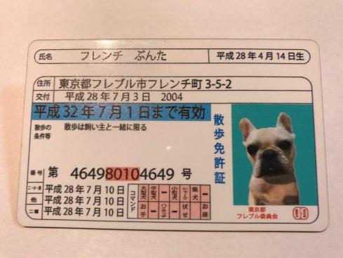 わんちゃん用散歩免許証