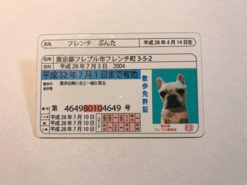 わんちゃん用散歩免許証3