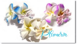 Plumeria*twin