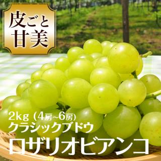 クラシックブドウ ロザリオビアンコ 2キロ 4〜6房