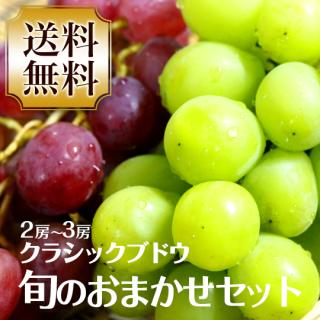 【送料無料】クラシックブドウ 旬のおまかせセット 2〜3房
