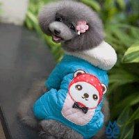 キャラリボスーツ ブルー Chee Pet