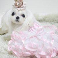 【OUTLET】フィールクイーンワンピース ピンク Mサイズ lollypop