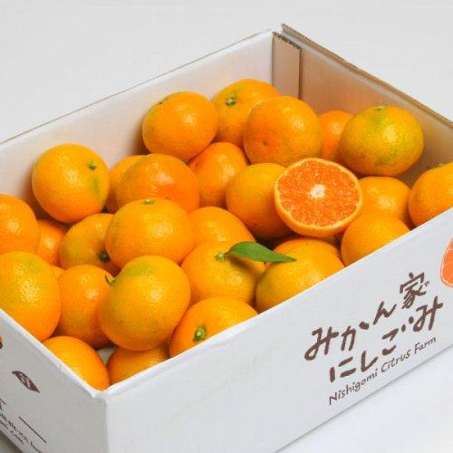 温州みかん 詰め合わせセット(10kg)