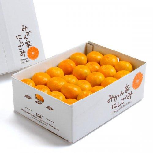 果汁たっぷり!温州みかん(A級品)