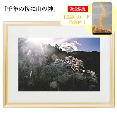 秋元隆良 奇跡の写真 「千年の桜に山の神」【金龍カード特典付!】代引き不可