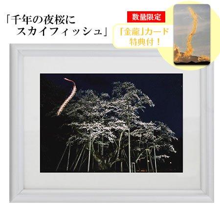 秋元隆良 奇跡の写真 2L版「千年の夜桜にスカイフィッシュ」【金龍カード特典付!】代引き不可