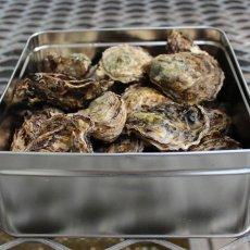 広島牡蠣殻つき・缶かん焼きセット(約25〜30個)