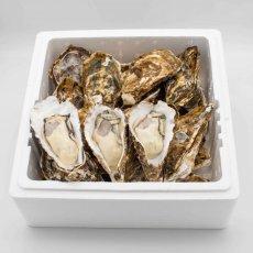 広島牡蠣殻つき 20個