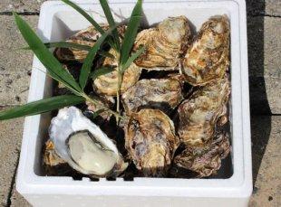広島牡蠣殻つき 100個