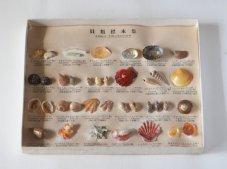 貝類標本集