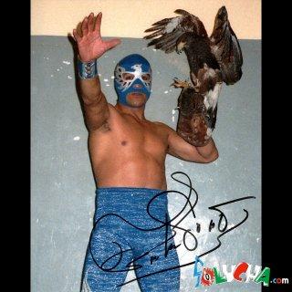 Aguila Solitaria Autographed Photo / アギラ・ソリタリア サイン入ブロマイド