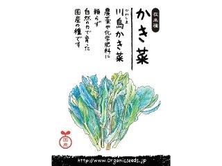 国産/自然農法種子川島かき菜<2.5ml・約500粒>