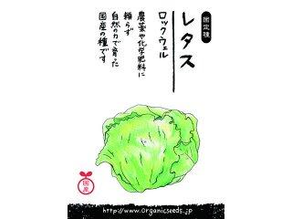 国産/自然農法種子レタス ロックウェル<0.25ml・約120粒>