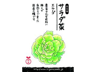 国産/自然農法種子サラダ菜 エルーゴ<0.5ml・約300粒>