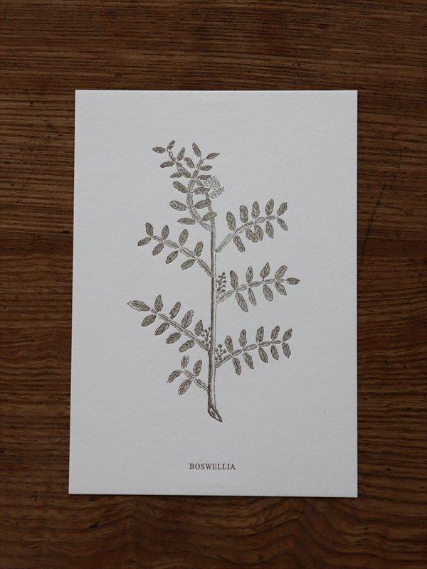 高山活版室 ポストカード BOSWELLIA(乳香)