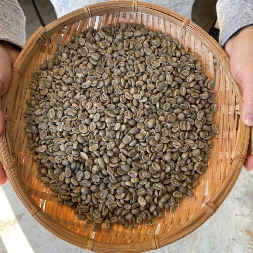 <2020年 新豆>★無農薬コーヒー生豆★ 東ティモール コカマウ組合 1kg