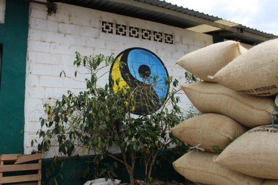 ★無農薬コーヒー生豆★メキシコ セスマッチ TR 1kg