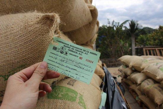 【在庫残りわずか】★無農薬コーヒー生豆★ メキシコ セスマッチ TR 5kg