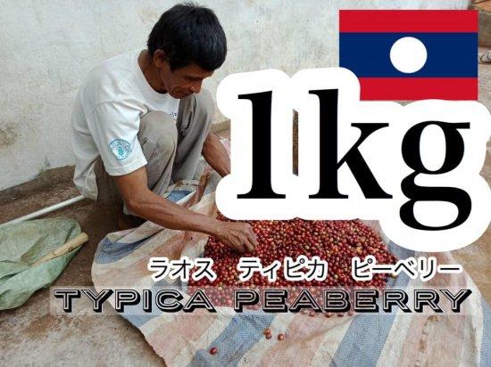 【残り1つ】★無農薬コーヒー生豆★ ラオス SAMURAI ティピカ ピーベリー(スクリーンサイズ16) 1kg